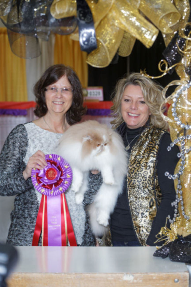 "Best in Show was GC, GP, NW Velvetkist Pack'n Heat of Krimpurrs (""Frankie""), a cream and white Persian neuter who was 4 years/7 months old."